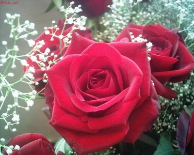 rosas_2.jpg